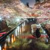 水門川の夜桜~終焉~