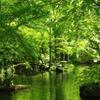 新緑の岐阜公園