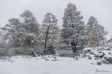 雪降る金沢