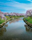 新境川の春