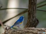 年の瀬も、青い鳥・・意味不明(笑)