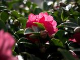 冬の花 (-^〇^-)b