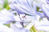 初夏の花・・暑~く咲く