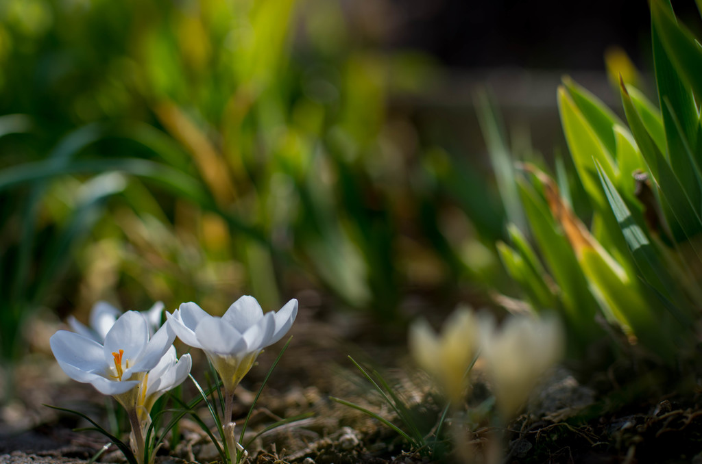 季節は巡って、春爛漫‥