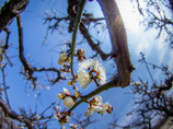 今日の空は春の色・・でも~、寒いっ{{ (>_<) }}