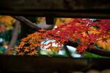 扉の向こうは、晩秋の色・・