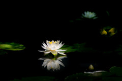 古池の輝き・・(-^^-)b