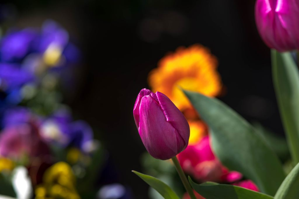 春景色‥春色いろいろ