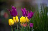 今年の春は「三雨四曇」