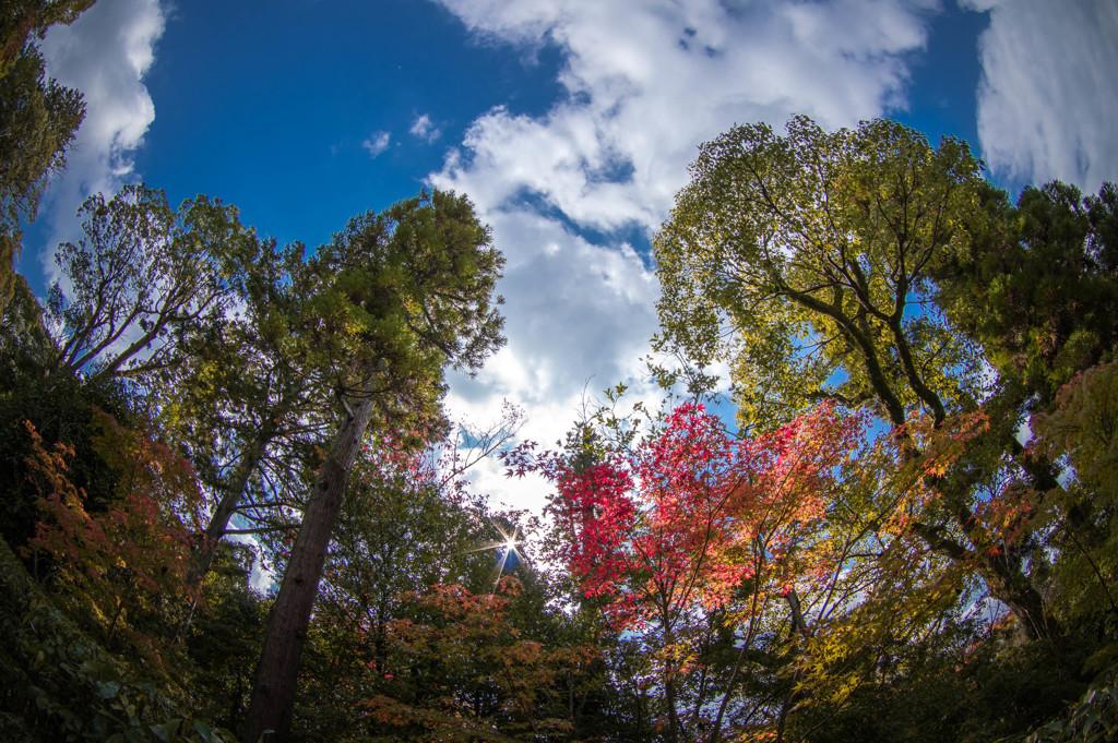 晩秋の輝き・・北の風