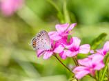 花と蝶・・夏景色