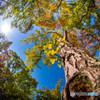 快晴の 空に色付く・・木々は秋