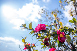 春めく陽射しと寒風と・・