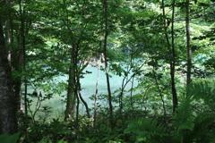 ☆白神山地のおひさもと十二湖