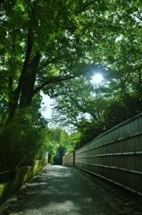 「初夏の木漏れ日」