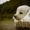 In the basket.