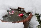 今日も小雪の降りかかる