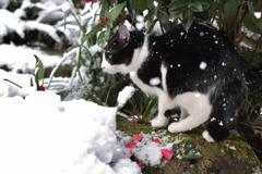 雪の日の冒険 その2