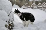 雪の日の冒険 その3