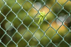秋色のフェンス