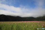 上がる霧の垂れ幕