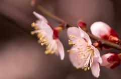 薄桃色の花びら