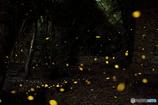 光溢れる姫の森