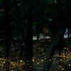 命の光 -光の絨毯-