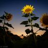 落日の中の太陽