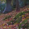 宝石箱の様な落ち葉たち