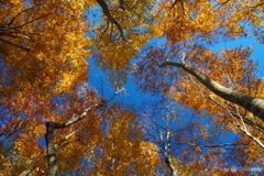 見上げた秋空