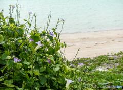 鳩間島の海辺で(♩〜ここにしか咲かない花)