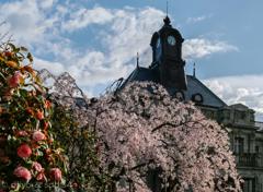 山形県郷土館 (文翔館)と春の花々。