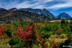 立山 天狗平付近の山紅葉
