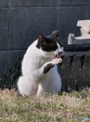 <<< meow...まだまだですな。。。>>>