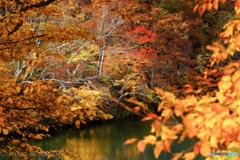 ドッコ沼の紅葉