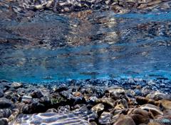 清流 海部川の鮎