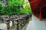 あをによし奈良|春日大社