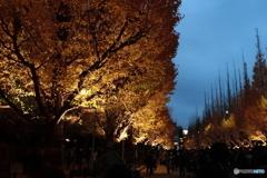 黄金の夕暮