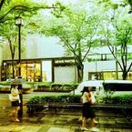 雨の表参道