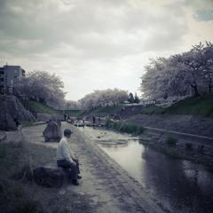 桜スナップ3