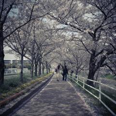 桜スナップ4