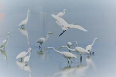 水鳥のオアシス