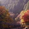 錦秋のつり橋