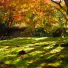京都嵐山散策、宝厳院その四