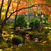 京都嵐山散策、宝厳院その五