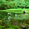 苔と池のある風景