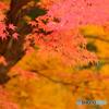 旧戸岩寺紅葉真っ盛り
