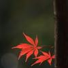 ふた葉の秋