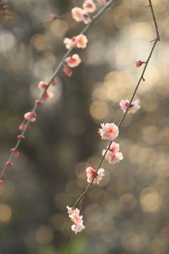 春は、そこまで・・・